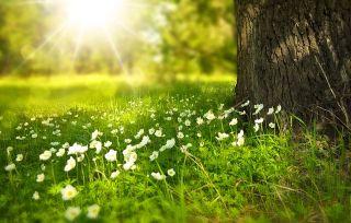 Gras im Sonnenschein